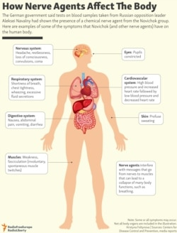 INFOGRAPHIC: How Nerve Agents Affect The Body