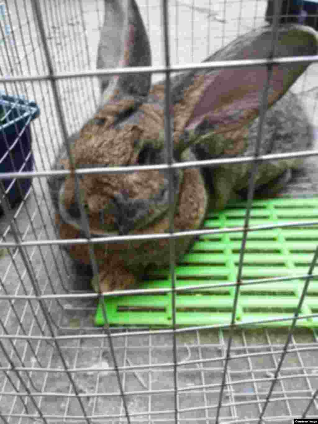 Те, кто разводит кроликов, считают данную отрасль одним из важных направлений сельского хозяйства Дагестана.
