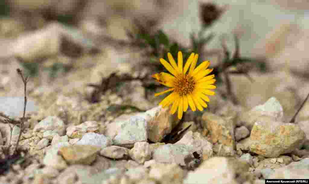 Сквозь известняковую толщу пробился мелкий осенний цветочек. Больше осенних пейзажей Марсианского озера – в фотогалерее