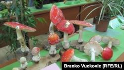 Sa izložbe gljiva u Kragujevcu