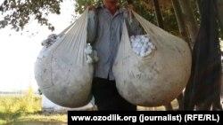 В Узбекистане на протяжении последних нескольких лет принуждают к сбору хлопка, металлолома, уборке улиц и прочей общественно-полезной деятельности, никак не связанной с их работой.