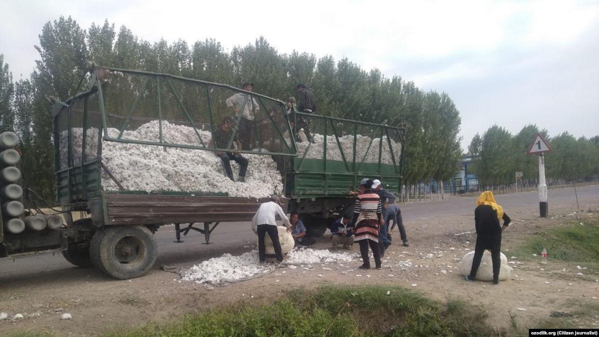 Majlis Podcast: Back Into Uzbekistan's Cotton Fields