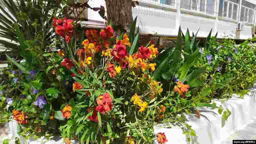 В палисадниках возле частных и многоквартирных домов распускаются цветы