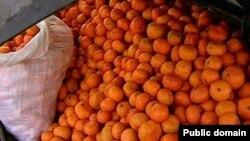 В государственных садах планируется собрать более 1 000 тонн цитрусовых