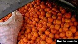 По некоторым прогнозам до новогодних праздников бизнесмены планируют вывести из Абхазии около 27 тонн мандаринов