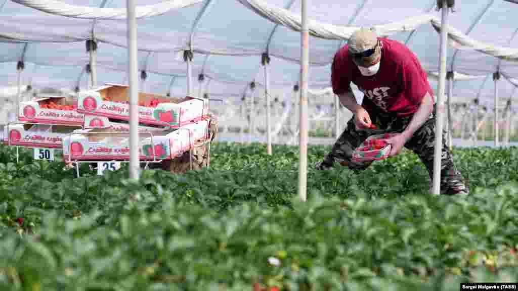 Співробітники тепличного господарства в Холмівці носять захисні маски