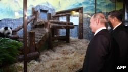 Russian President Vladimir Putin and China's Xi Jinping view two new Chinese pandas at the Moscow Zoo.