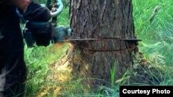 Dagestan -- Deforestation in Makhachkala