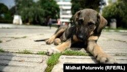 Приют для бездомных животных в Узбекистане построят за счет частных средств.