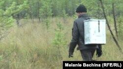 """Сборщик клюквы с """"турачом"""" за спиной"""