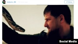 Chechen leader Ramzan Kadyrov (right) grapples with a snake in a screen grab from a video he posted on Instagram.