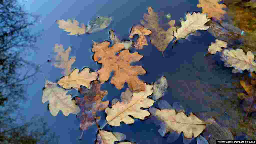 Сухе дубове листя не тоне у воді