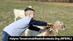 Натівці подарували вихованцям Краковецького навчально-реабілітаційного центру тварини