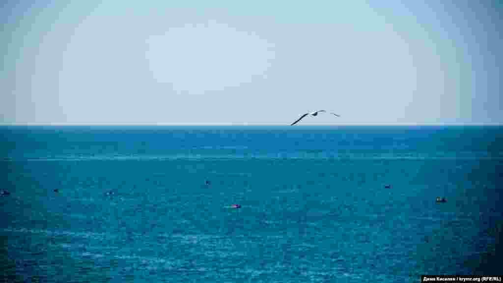Чайка над Чорним морем