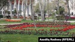 Heydər Əliyev adına sarayın qarşısındakı park