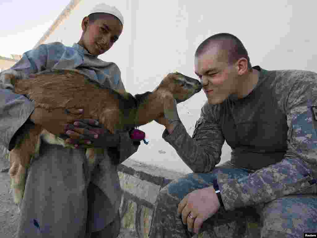 U.S. Army soldier Christopher Steiner plays with a goat brought by an Afghan boy near a police station in Kandahar. - Photo by Shamil Zhumatov of Reuters