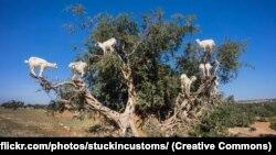 На этой картинке нейронная сеть NeuralTalk2 «видит» стаю птиц в воздухе, а нейронная сеть Microsoft Azure — группу жирафов у дерева
