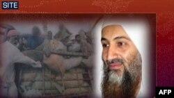 Усама бин Ладен в одном из видеообращений