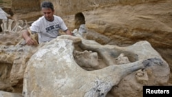An archeologist examines the skeleton of a mammoth at an open-pit coal mine in Kostolac, Serbia. (file photo)