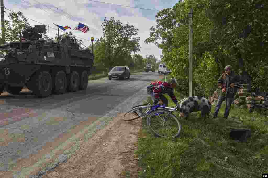 Two Moldovan men try to restrain a pig on the side of the road as a column of U.S. armored vehicles passes through the village of Gherman, 140 kilometers east of Chisinau. U.S. and Moldovan military forces are taking part in joint, two-week-long exercises. (epa/Dumitru Doru)