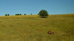 De ce agricultura bio nu prinde rădăcini în Republica Moldova?