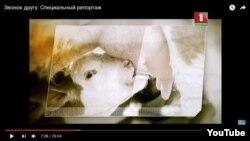 Скріншот зі «спеціального репортажу» на телеканалі «Білорусь-1»
