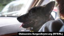 Собака Джессі з буксиру «Яни Капу»