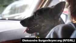 Собака Джесси с буксира «Яны Капу»
