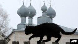 Кот ля праваслаўнай царквы ў Запясоч'і
