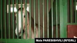 В грузинском обществе иметь дорогого коня, быть хорошим наездником – это и по сей день своего рода демонстрация благополучия и бережного отношения к традициям