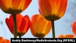 фестиваль цветов проводится седьмой год подряд при поддержке мэрии Тбилиси