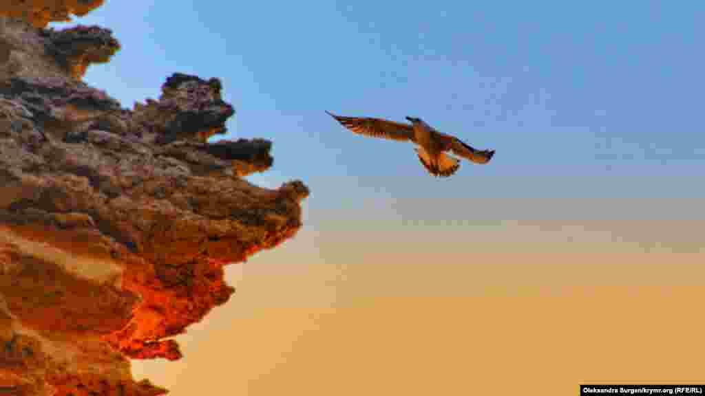 Qaya yanında uçqan çağala