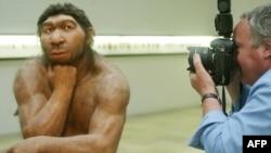 Neandertalac, Muzej u Halleu, Njemačka