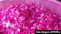Latice đulbešećer ruže