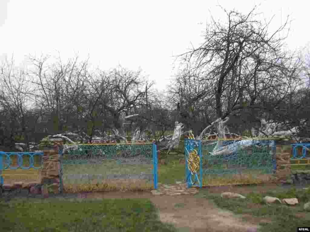 Яблуневий кущ займає територію 10 соток. Дослідники кажуть, що це 5-6-те покоління дерева-куща