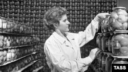 Фабрика по производству консервированных помидоров. СССР, 1963 год