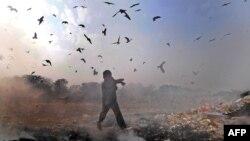 На полигоне вблизи аэропорта появилось огромное количество птиц, что несет потенциальную угрозу безопасности авиаполетов