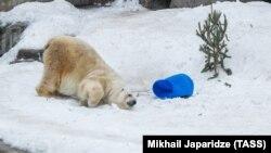 Белый медведь (снимок сделан 5 февраля 2018 в московском зоопарке)