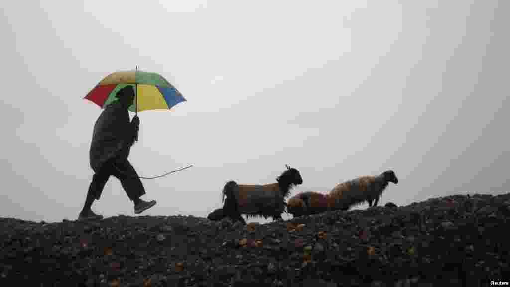 An Afghan shepherd guides his sheep on a rainy day in Jalalabad Province. (Reuters/Parwiz)