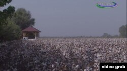Uzbekistan - cotton field in Andijan region, 8 October 2014
