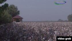 Uzbekistan - cotton field in Andijan region, 8 October 2014