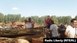 Защитникам леса не удалось предотвратить вырубку