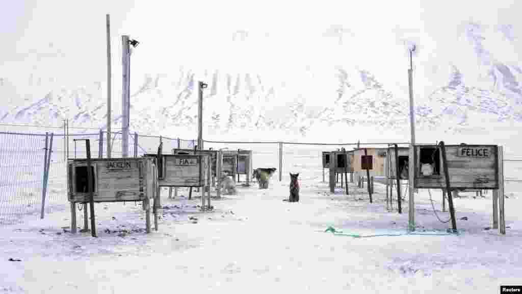 Kənd Şvitsbergen arxipelaqının şimalında - Şimal qütbündən cəmi 1200 kilometr uzaqlıqda yerləşir. Əvvəl arxipelaq yalnız ayılar və başqa vəhşi heyvanların oylağı idi. Amma 100 il öncə sənaye obyektləri peyda olmağa başlayanda heyvanlar burdan perik düşdülər.