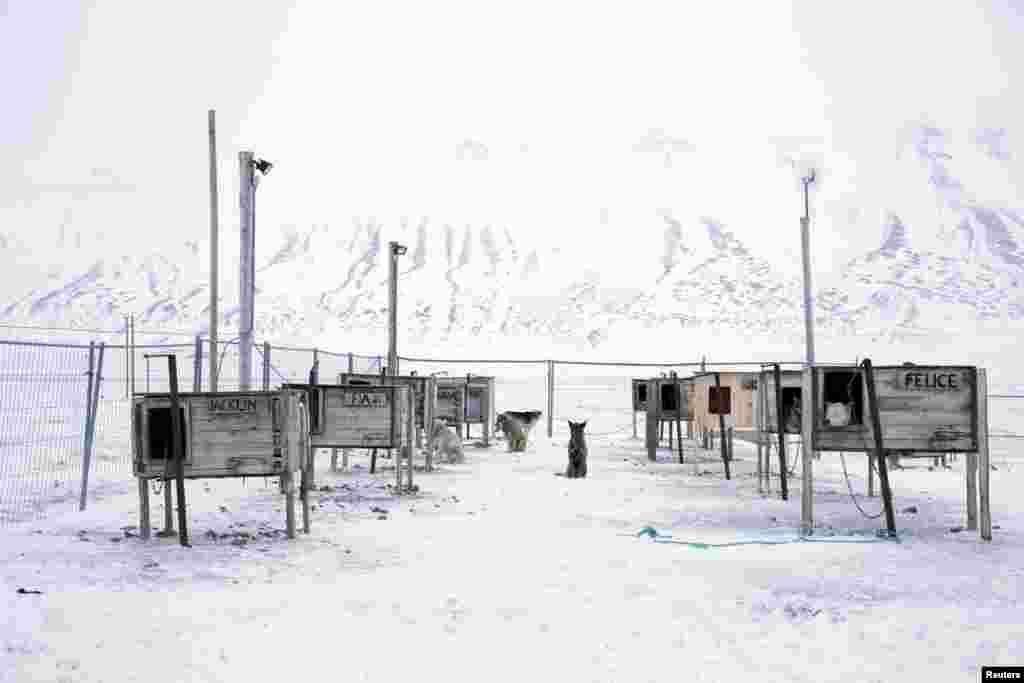 Поселок находится в северной части архипелага Шпицберген, всего в 1200 километрах от северного полюса. Ровно 100 лет назад острова населяли лишь медведи и олени. Но когда на севере появилась промышленное производство, их появления стали более редкими.