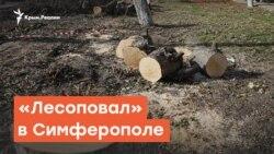 Вырубка деревьев в Симферополе | Радио Крым.Реалии