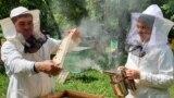Умартачылар Гафур Зарипов һәм аның кызы Нурия Зарипова, Лаеш районы