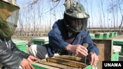 Bee keepers in Afghanistan