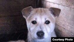 A stray dog in the Tatarstan capital, Kazan
