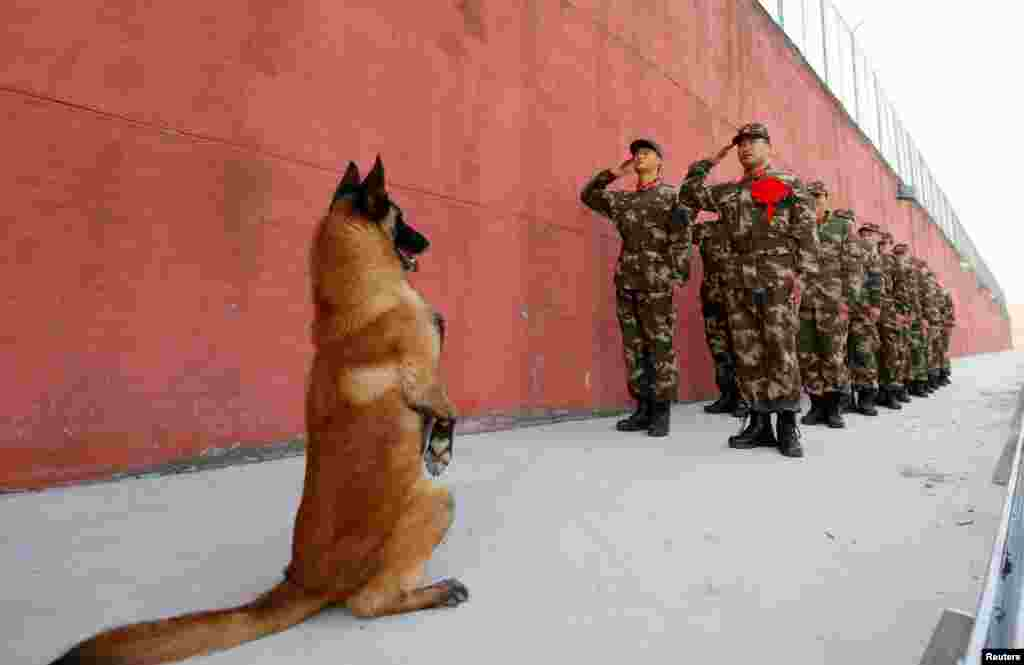 An army dog stands up as retiring soldiers salute their guard post before retirement in Suqian, Jiangsu Province, China. (Reuters/Stringer)