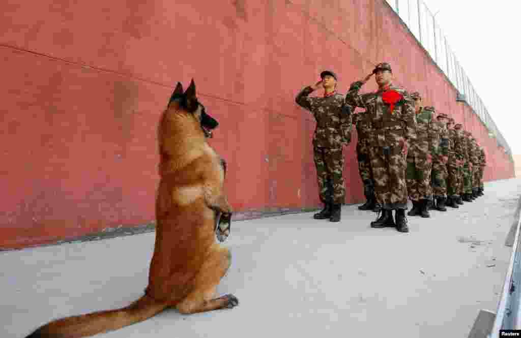 Një qen i ushtrisë ngrihet në këmbë, ndërsa ushtarët në pension e përshëndesin para se të dalin në pension në Suqian, Provinca Jiangsu e Kinës.